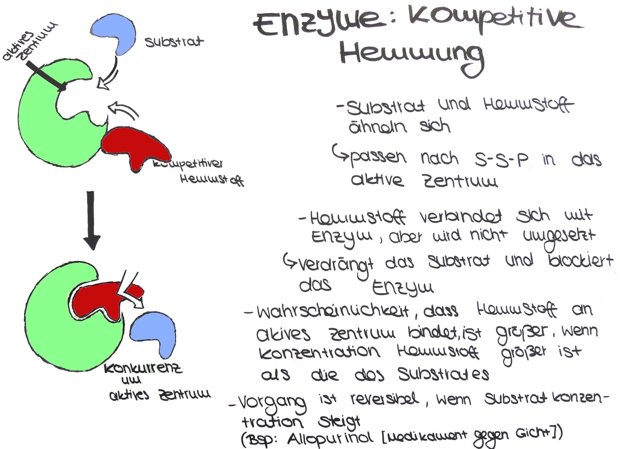 Cytologie Die Kompetitive Enzymhemmung