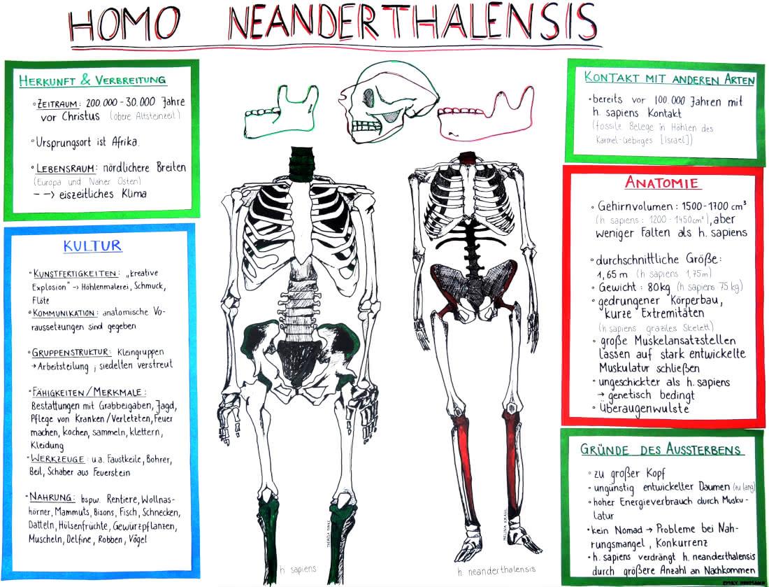 Evolution des Menschen: Die Koexistenz von Homo sapiens und Homo ...