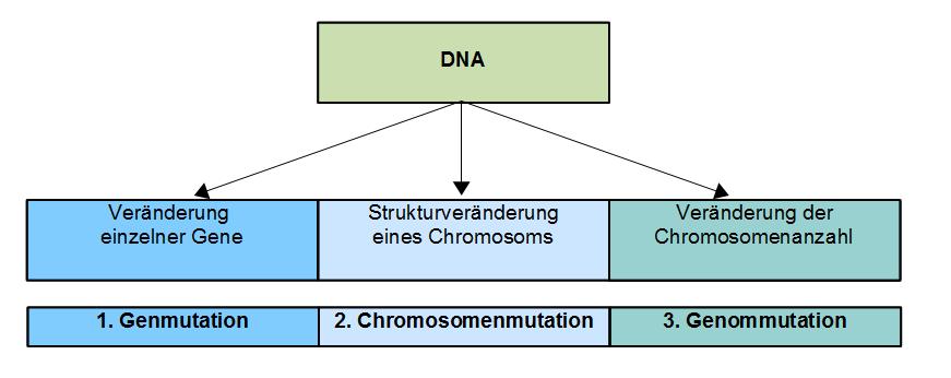 Genetik: Mutation und Mutationstypen