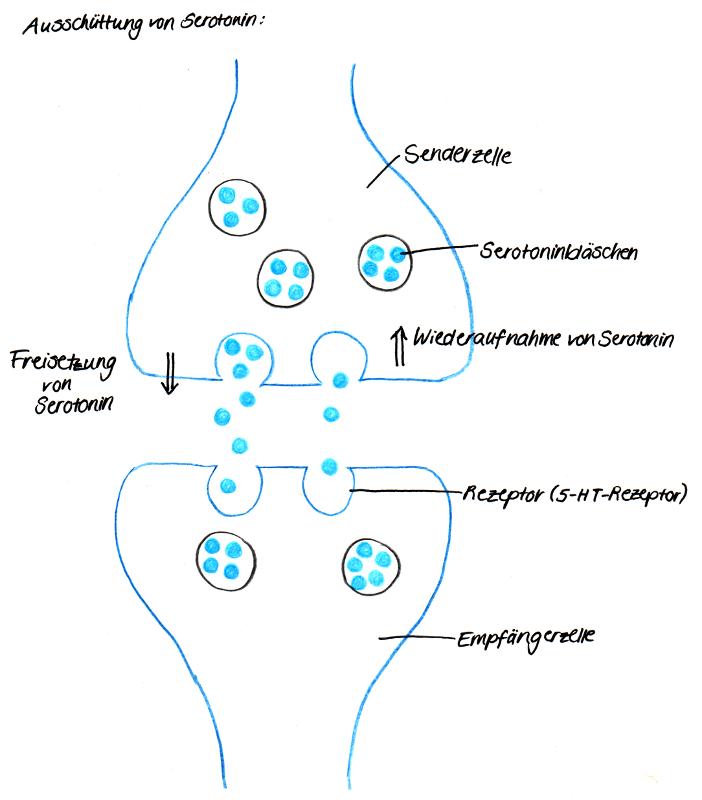 was sind synapsen