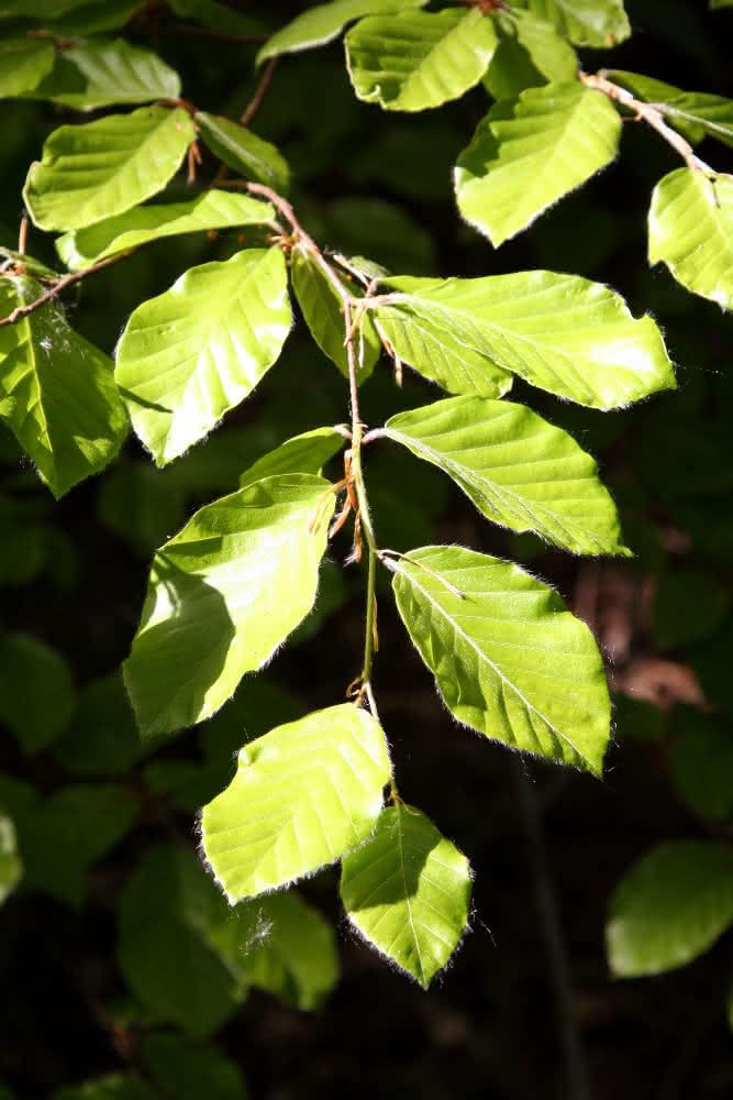 214 Kologie 214 Kosystem Wald