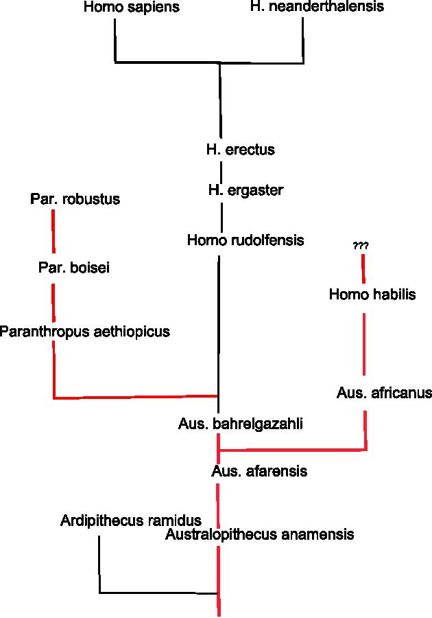 Evolution des Menschen: 06 Der Australopithecus